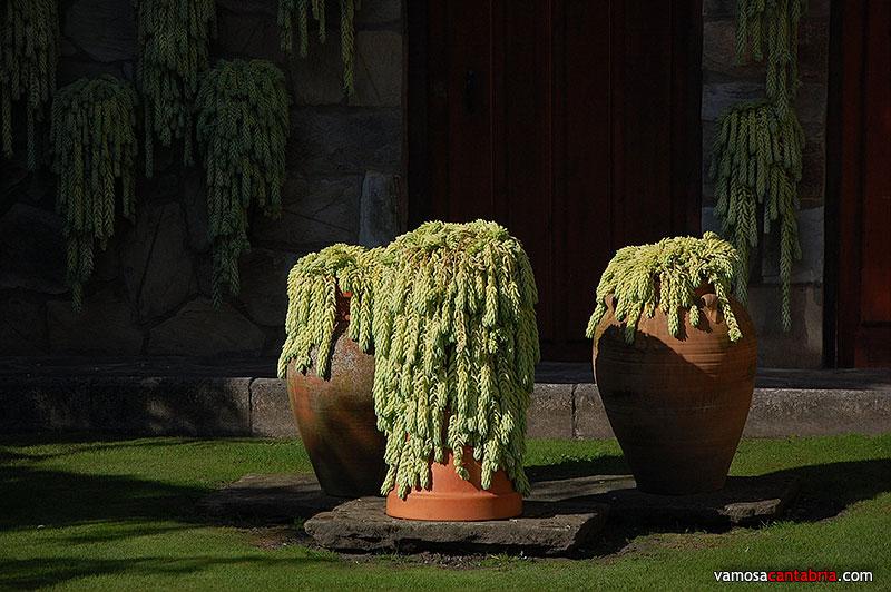 Los cactus de li rganes vamos a cantabria - Informacion sobre los cactus ...