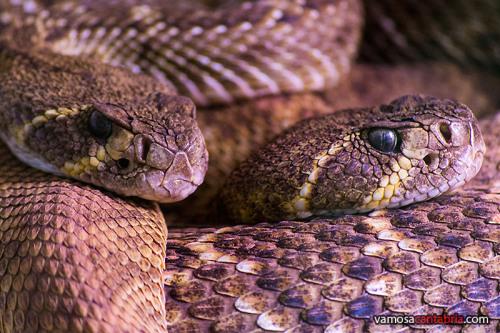 Serpientes en Cabárceno
