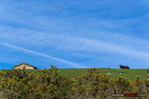 Cielo, pradera y vaca