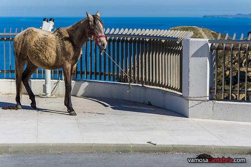 Caballo aparcado en Cabo Mayor