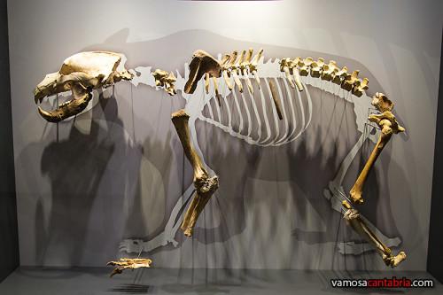 Huesos en el MUPAC I