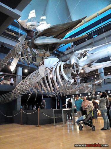 Esqueletos de ballenas colgantes I