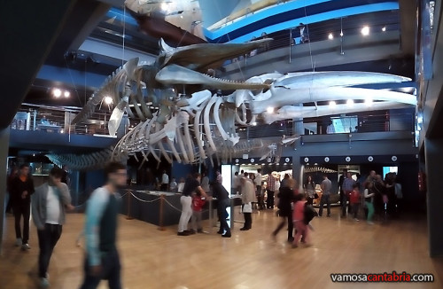 Esqueletos de ballenas colgantes II