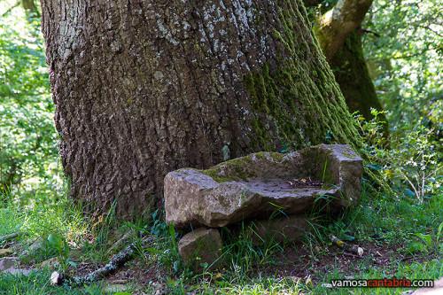 Piedra de sarcófago junto al árbol