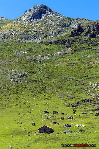 Montaña, vacas y cabaña
