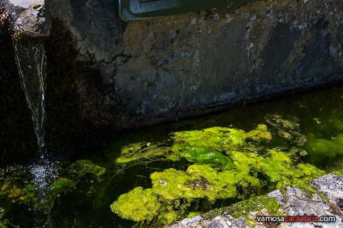Algas en la fuente