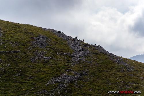 Cabras en la ladera I