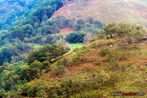 Prado en la montaña