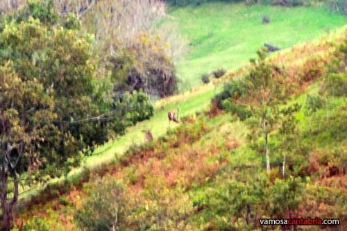 Ciervo en el prado