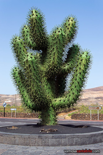 Cactus de chapa I