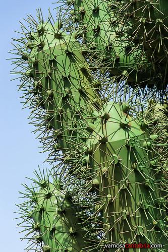 Cactus de chapa II
