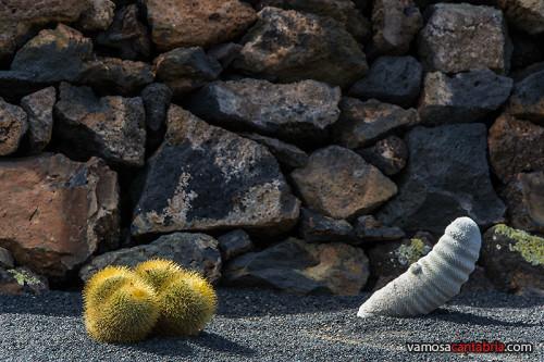 Cactus pirulero