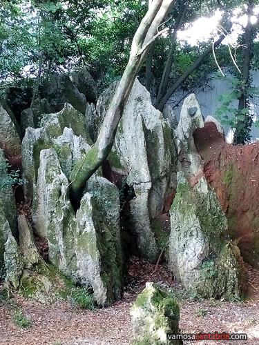 Arbol nacido entre las piedras