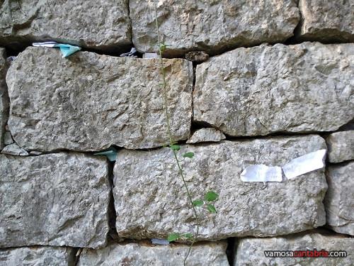 Muro de los deseos II